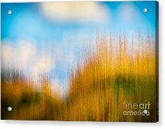 Weeds Under A Soft Blue Sky Acrylic Print