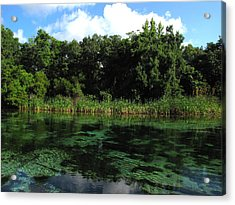 Weeki Wachee River Acrylic Print by Barbara Bowen