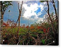 Weeks Bay Swamp Acrylic Print by Michael Thomas