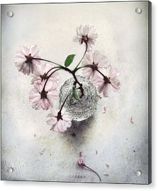 Acrylic Print featuring the photograph Weeping Cherry Blossoms Still Life by Louise Kumpf