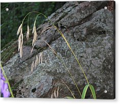 Weeping Grass Acrylic Print