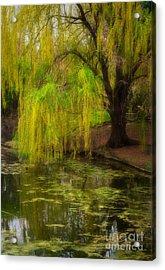 Weeping Pond Acrylic Print by Fred Lassmann