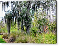 Acrylic Print featuring the photograph Weeping Willow by Madeline Ellis