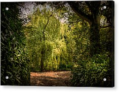 Acrylic Print featuring the photograph Weeping Willow by Ryan Photography