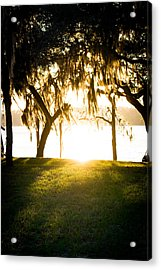 Spanish Moss At Sunset Acrylic Print by Shelby Young