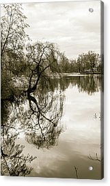 Weeping Willow Tree In The Winter Acrylic Print