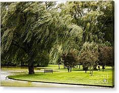 Weeping Willow Trees On Windy Day Acrylic Print by Carol F Austin