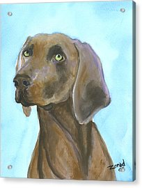 Weimarainer Dog Art Acrylic Print by Mary Jo Zorad