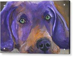 Weimaraner Dog Art Acrylic Print
