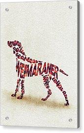 Weimaraner Watercolor Painting / Typographic Art Acrylic Print