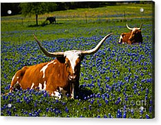 Welcome To Texas Acrylic Print by John Stanisich