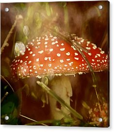 Welcome To Wonderland Acrylic Print by Odd Jeppesen