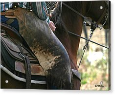 Well Used Chinks.. Acrylic Print by Carol Miller