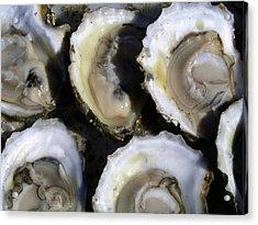 Wellfleet Oysters Acrylic Print