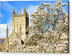 Wells Cathedral And Spring Blossom Acrylic Print