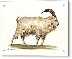 Welsh Long Hair Mountain Goat Acrylic Print