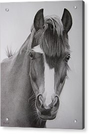 Welsh Pony Acrylic Print by Karen Wood