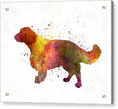 Welsh Springer Spaniel In Watercolor Acrylic Print by Pablo Romero