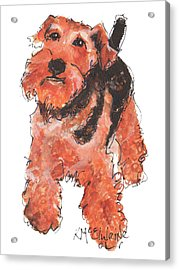 Welsh Terrier Or Schnauzer Watercolor Painting By Kmcelwaine Acrylic Print