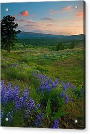Wenas Valley Sunset Acrylic Print by Mike  Dawson