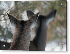 We're All Ears Acrylic Print by Sandra Bronstein