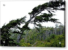 West Coast  Trees In Rain Acrylic Print