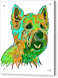 West Highland Terrier Acrylic Print by Marlene Watson