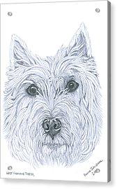 West Highland Terrier Acrylic Print by Yvonne Johnstone