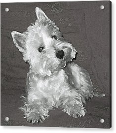 Acrylic Print featuring the digital art West Highland White Terrier by Charmaine Zoe