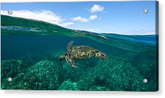West Maui Green Sea Turtle Acrylic Print