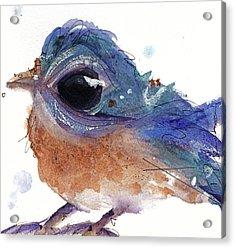 Acrylic Print featuring the painting Western Bluebird by Dawn Derman