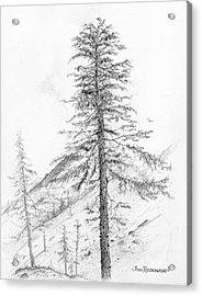 Western Hemlock Acrylic Print