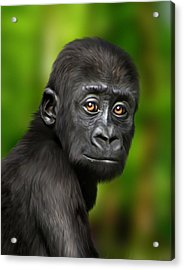 Western Lowland Gorilla Baby Acrylic Print