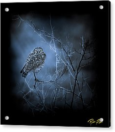 Acrylic Print featuring the photograph Western Owl Gloom by Rikk Flohr