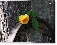 Western Yellow Rose II Acrylic Print