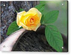 Western Yellow Rose Vi Acrylic Print