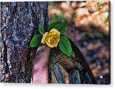 Western Yellow Rose Viii Acrylic Print