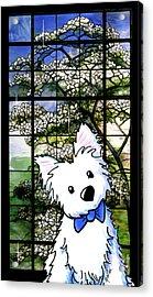 Westie At Dogwood Window Acrylic Print by Kim Niles