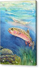 Westslope Cutthroat Acrylic Print by Gale Cochran-Smith