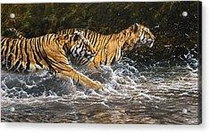 Wet And Wild Acrylic Print