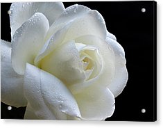 Wet Beauty. Acrylic Print by Terence Davis