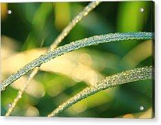 Wet Grass Acrylic Print