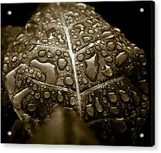 Wet Havana Tobacco Leaf Acrylic Print by Frank Tschakert