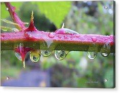 Wet Prick Acrylic Print by Donna Blackhall