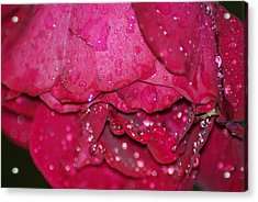 Wet Rose Acrylic Print by Heather Green