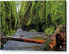Wet Trail Acrylic Print by Jonathan Davison