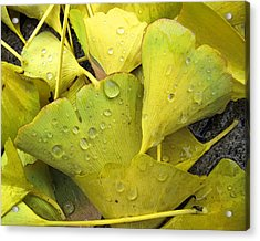 Wet Yellow Leaves 2 Wc  Acrylic Print by Lyle Crump