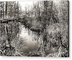 Acrylic Print featuring the photograph Wetland Essence by Betsy Zimmerli