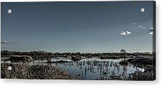 Wetlands Desaturated  Acrylic Print