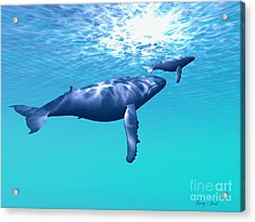 Whale Company Acrylic Print by Corey Ford